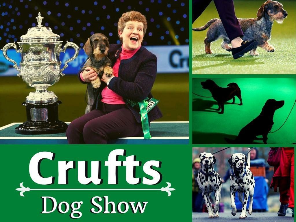 Crufts 2020 Dog Show